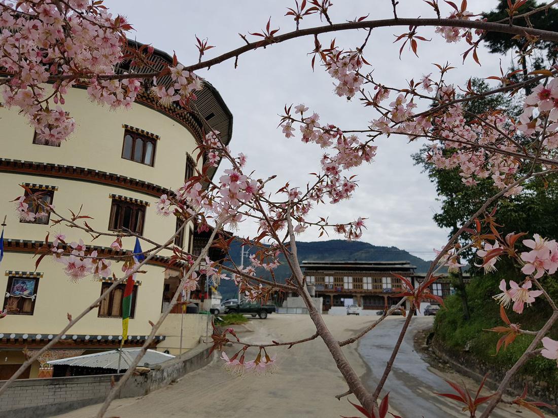 Có phải ai cũng tìm thấy hạnh phúc ở Bhutan? - Ảnh 9.